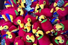 inedu-parrots